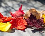Spadané listí - podzimní dekorace