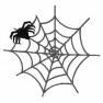Pavouk v pavučině